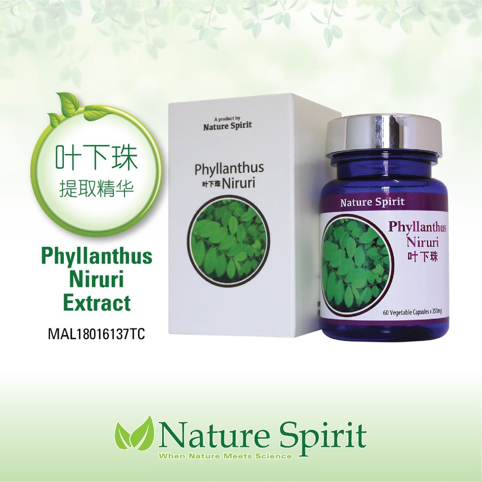 Nature Spirit Phyllanthus Niruri (Extract)