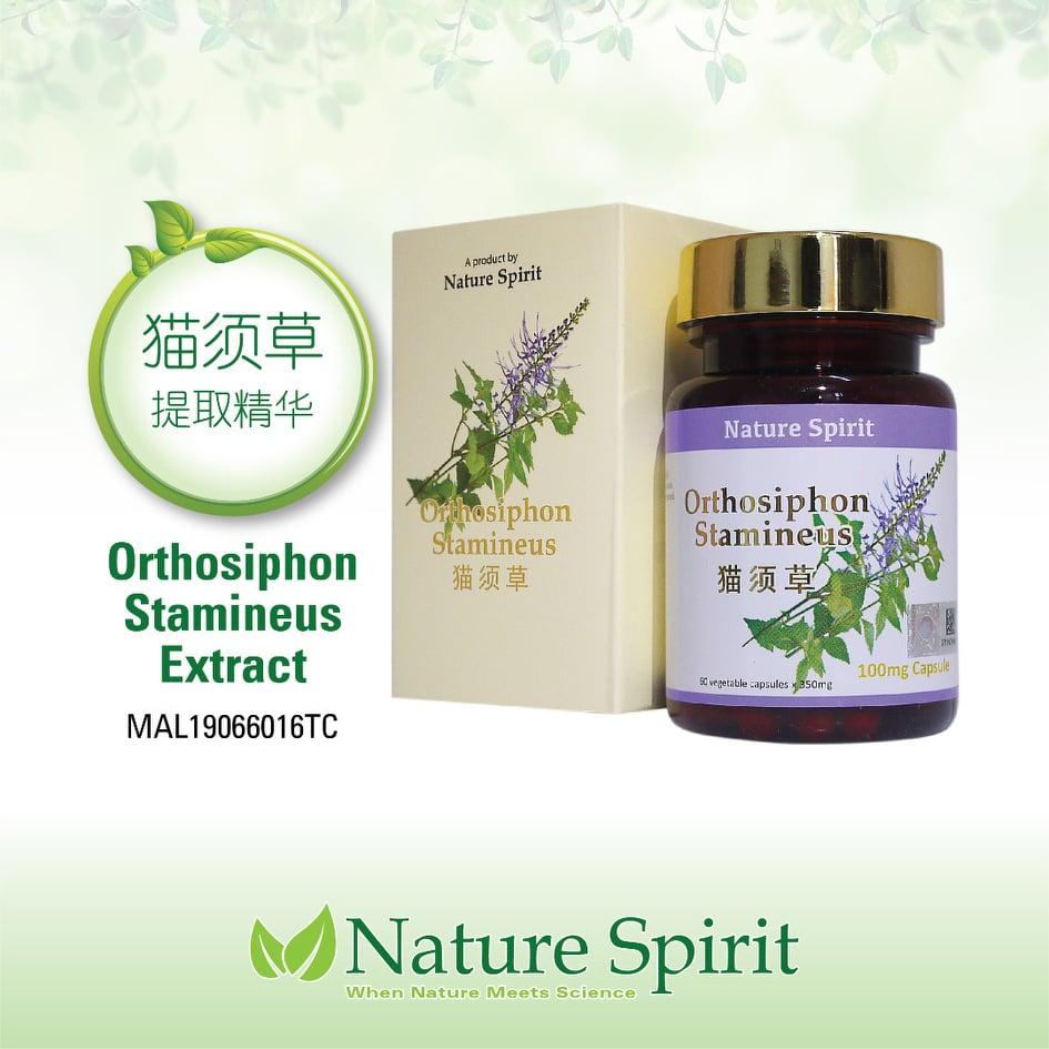 Nature Spirit Orthosiphon Stamineus (Extract)
