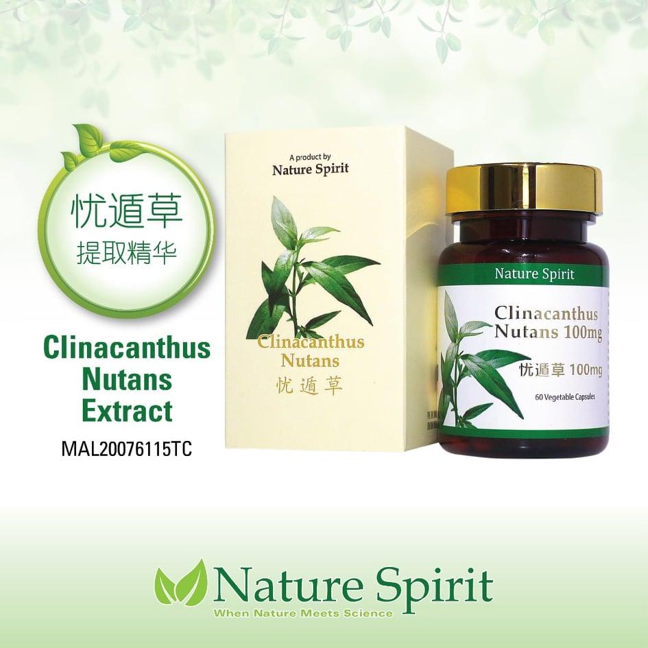 Nature Spirit Clinacanthus Nutans